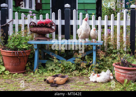 Chickens on and in front of a blue bench in the front yard of a green house - Stock Photo