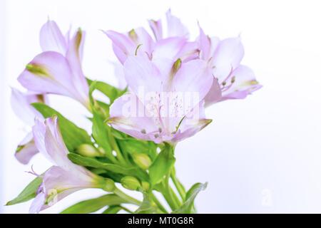 Blue Alstroemeria aurea flower bouquet - Stock Photo