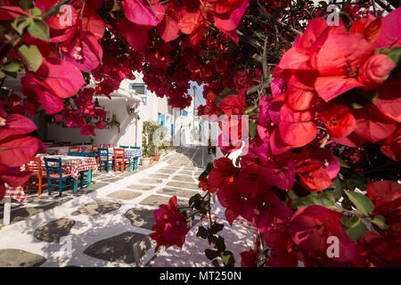 MYKONOS, GREECE - MAY 2018: View over the old cobbled street in Mykonos town district Little Venice through bougainvillea bush in blossom. - Stock Photo