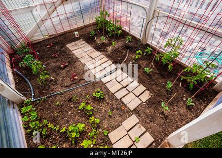 Freshly planted residential vegetable garden - Stock Photo
