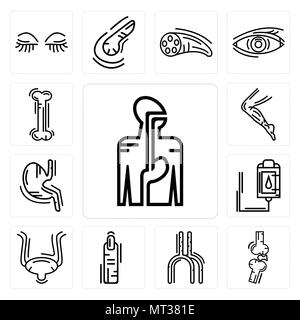 Set Of 13 simple editable icons such as Digestive System, Bones Joint, Human Artery, Finger, Bladder, Blood Transfusion, Stomach with Liquids, Men Leg - Stock Photo
