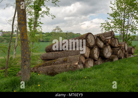 A pile of big logs on a green meadow with a cloudy sky in background, picture from Bayern Germany. - Stock Photo