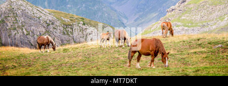 Herd of horses grazing near Pourtalet pass, Ossau valley in the Pyrenees, France - Stock Photo