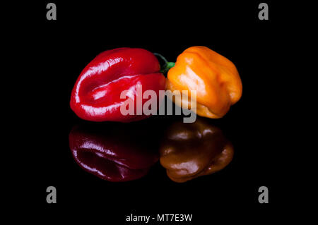 Two habanero peppers yellow and red on black background with reflection - Stock Photo