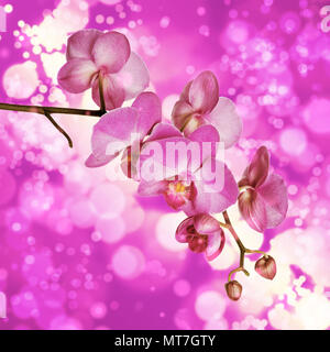 Blossoming branch of purple moth orchid flower on a bokeh background - Stock Photo
