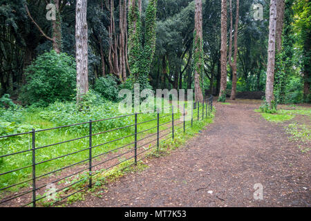 Green trees in the backgraound at park in Ireland - Stock Photo