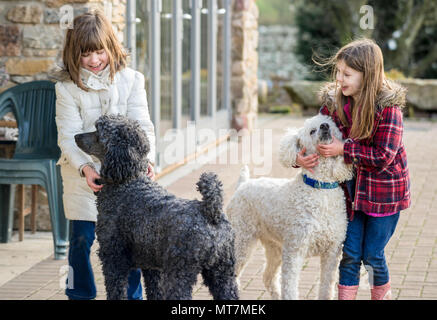 Two caucasian upper class Britsh girls (children) playing and having fun with large pet standard poodles in natural coat in a rural country garden - Stock Photo