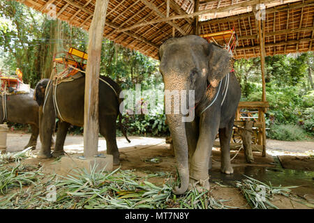 Tamed nice elephants with saddle standing at zoo. - Stock Photo