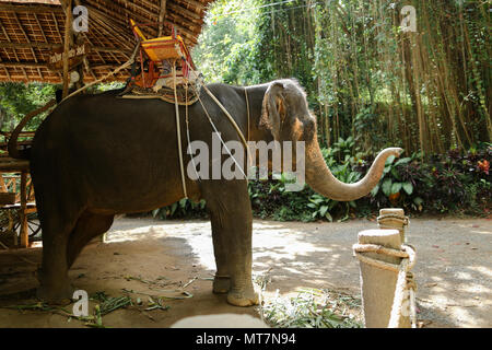 Tamed large elephant standing with yellow saddle. - Stock Photo