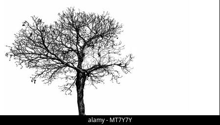 Silhouette dead tree  isolated on white background for scary, death, and peace concept. Halloween day background. Art and dramatic object. - Stock Photo