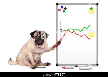 serious business pug puppy dog sitting down, pointing at white board with chart, yellow notes and magnets, isolated on white background - Stock Photo