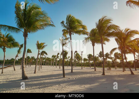 View of tropical beach through coconut palm trees on sunset. Shadows of palm tree fronds fluttering on textured sand beach. Turquoise water of the Caribbean Sea. Riviera Maya Mexico. - Stock Photo