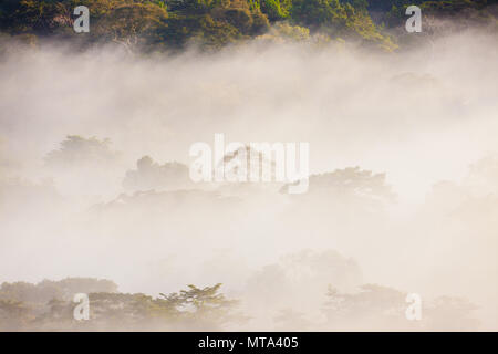 Damp rainforest at sunrise in Soberania national park, Republic of Panama. - Stock Photo