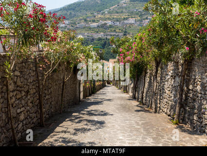 A narrow steep street with blooming oleanders in Ravello. Amalfi Coast. Italy - Stock Photo