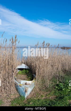 Abandonned fishing boat in reedbed by Lake Canet Saint-Nazare, Canet-en-Roussillon, Roussillon, Pyrenees-Orientales, France - Stock Photo