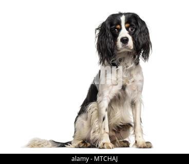 Mixed-breed dog , 1 year old, sitting against white background - Stock Photo