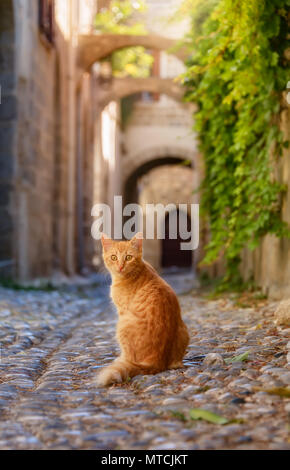 Curious ginger cat sitting in a picturesque ancient cobblestone alley with arches in the medieval  Old Town of Rhodes, Dodecanese, Greece - Stock Photo