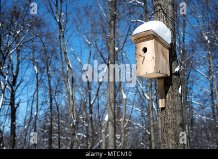 Handmade ornate wooden birdhouse attached to a large tree in a forest in winter with snow covered roof providing a home for birdlife - Stock Photo