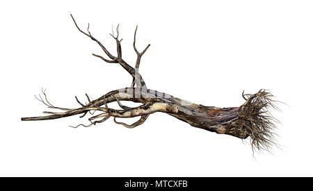 3D rendering of a dead red gum tree isolated on white background - Stock Photo
