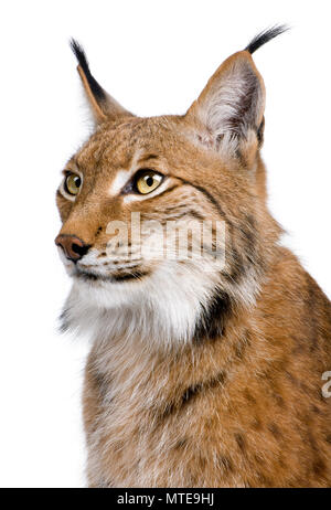 Close-up of Eurasian Lynx, Lynx lynx, 5 years old, in front of white background - Stock Photo
