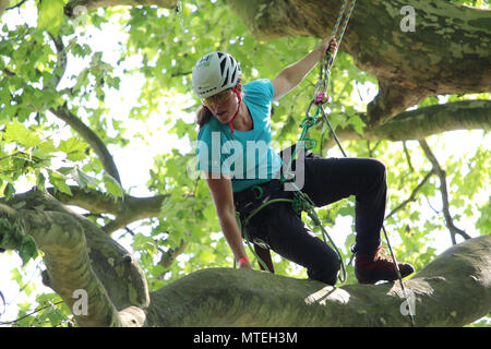 MECHELEN, BELGIUM, 26 MAY 2018: Former World Champion Josephine Hedger competing at the Belgian Tree Climbing Championships in Bonheiden near Mechelen - Stock Photo