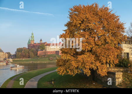 Quay of the river Wisla, the Royal Palace on Wawel Hill, and a motley tree in the foreground. Krakow. Poland - Stock Photo