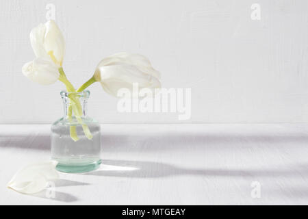 Two white blossoming tulips in a glass bottle on a white background - Stock Photo
