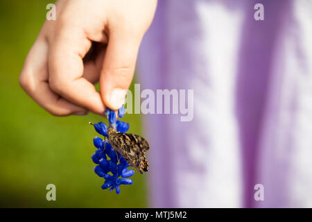Girl Child holding Flower (Grape Hyacinth) with Painted Lady or Cosmopolitan Butterfly Feeding on Nectar with Wings Closed - Stock Photo