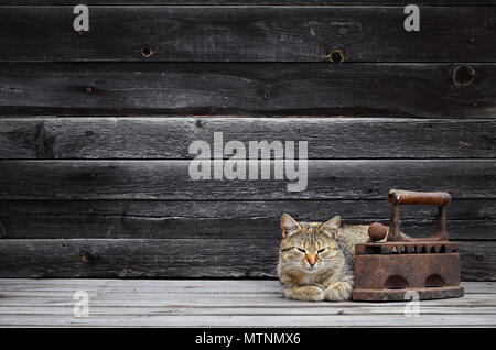 A multi-colored thick cat is located next to a heavy and rusty old coal iron on a wooden surface against a wall of black horizontal wooden boards. Obs - Stock Photo