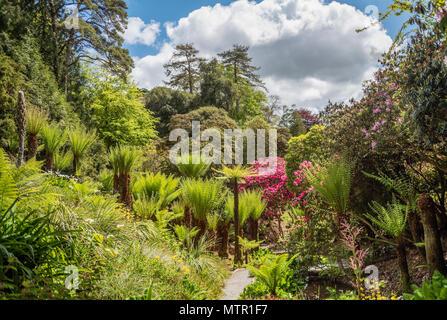 Subtropical Water Garden at the center of Trebah Garden, Cornwall, England, UK