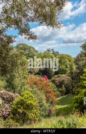 Rhododendron Valley at the center of Trebah Garden, Cornwall, England, UK