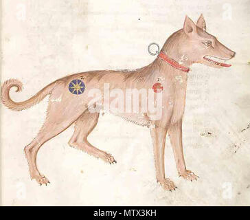 . Medieval illumination of a dog, 14th century, from a Codex in the Czech Republic . 14th century. Unknown 410 Medieval dog - Stock Photo