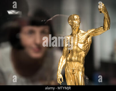 31 May 2018, Germany, Berlin: A curator of the state museums examining the bronze sculpture 'muscle man' at the 'Fleisch' (lit. meat) exhibition in the Altes Museum (old museum) in Berlin. The exhibition is from the 01 June to the 31 August. Photo: Soeren Stache/dpa - Stock Photo