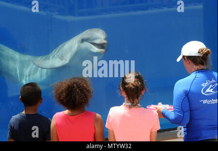 Marineland, USA. May 31, 2018 - Marineland, Florida, United States - Children watch as a bottlenose dolphin performs for a trainer at Marineland Dolphin Adventure in Marineland, Florida during the attraction's 80th anniversary celebration on May 31, 2018. The park, the world's first oceanarium, opened in 1938 as Marine Studios, allowing filmmakers to shoot underwater footage and visitors to see marine life live and up close. Credit: Paul Hennessy/Alamy Live News - Stock Photo