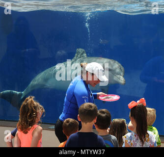 Marineland, USA. May 31, 2018 - Marineland, Florida, United States - A bottlenose dolphin performs for a group of children at Marineland Dolphin Adventure in Marineland, Florida during the attraction's 80th anniversary celebration on May 31, 2018. The park, the world's first oceanarium, opened in 1938 as Marine Studios, allowing  filmmakers to shoot underwater footage and visitors to see marine life live and up close. Credit: Paul Hennessy/Alamy Live News - Stock Photo
