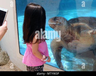 Marineland, USA. May 31, 2018 - Marineland, Florida, United States - A child observes a sea turtle in a tank at Marineland Dolphin Adventure in Marineland, Florida during the attraction's 80th anniversary celebration on May 31, 2018. The park, the world's first oceanarium, opened in 1938 as Marine Studios, allowing  filmmakers to shoot underwater footage and visitors to see marine life live and up close. Credit: Paul Hennessy/Alamy Live News - Stock Photo