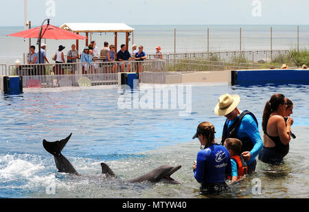 Marineland, USA. May 31, 2018 - Marineland, Florida, United States - A bottlenose dolphin performs for guests at Marineland Dolphin Adventure in Marineland, Florida during the attraction's 80th anniversary celebration on May 31, 2018. The park, the world's first oceanarium, opened in 1938 as Marine Studios, allowing  filmmakers to shoot underwater footage and visitors to see marine life live and up close. Credit: Paul Hennessy/Alamy Live News - Stock Photo