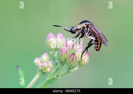 Mosquito on a flower - Stock Photo