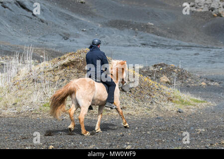 Man riding an  Icelandic horse, a breed of horse developed in Iceland. Although the horses are small, at times pony-sized, most registries for the Icelandic refer to it as a horse. Icelandic horses are long-lived and hardy. - Stock Photo