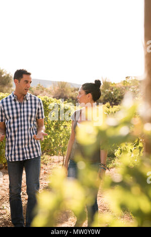 Man in a checkered shirt and a brunette walking through the vineyards on a sunny day - Stock Photo