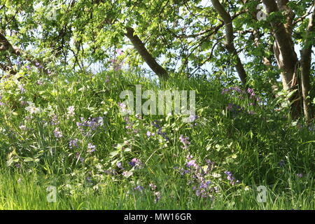 Wild flowers and undergrowth near tree trunk in woods - Stock Photo