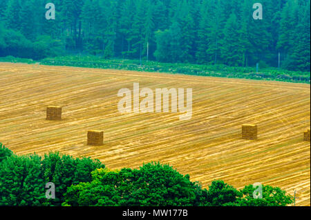 wiev - landscape - farming - countryside - Warminster - Stock Photo