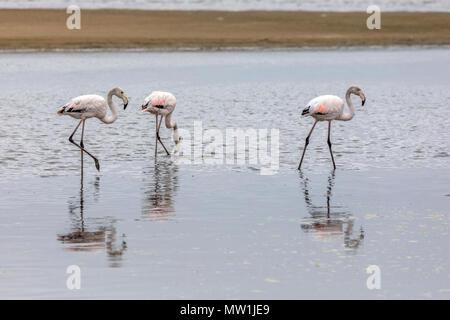 Walvis Bay, Erongo, Namibia, Africa - Stock Photo