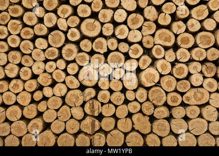Log wood pile - Stock Photo