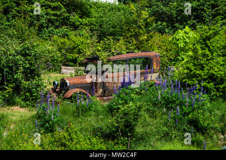 An old car surrounded by the nature. - Stock Photo