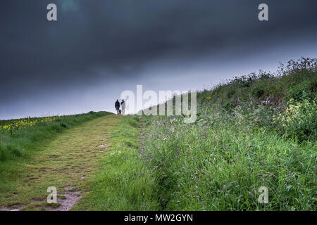 Two people and a dog walking through a field. - Stock Photo