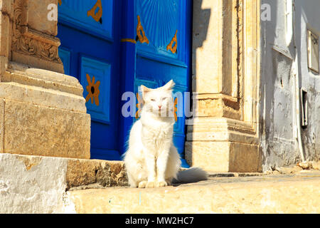 The cat sits on the street near the door. Sidi Bou Said, Tunisia. - Stock Photo