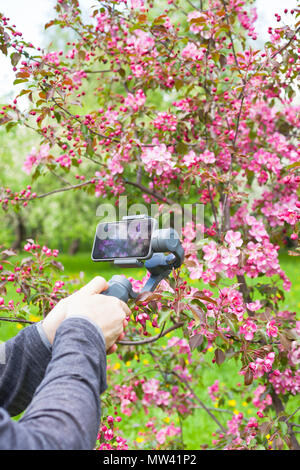 Close-up of man blogger hands shooting video on smartphone using an image stabilizer in the pink blooming apple garden at spring - Stock Photo