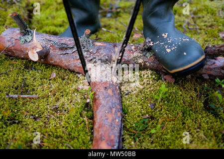 Close-up tourist cutting log of wood with hand saw. Concept of having wild vacation on nature. - Stock Photo