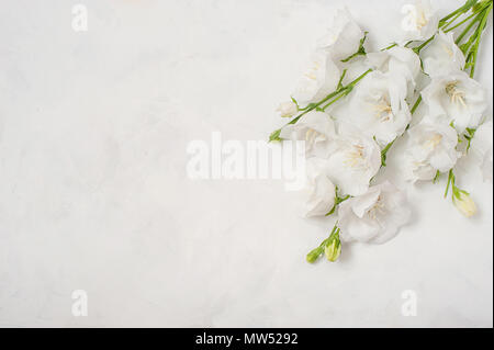 Platycodon grandiflorus flowers isolated on white background - Stock Photo